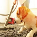Care and prevention for your carpets.
