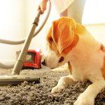 Entretien & prévention: maximisez votre tapis