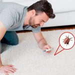 Quand faire nettoyer mes tapis?