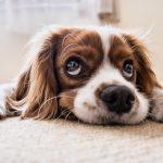 Bad smells in my carpet
