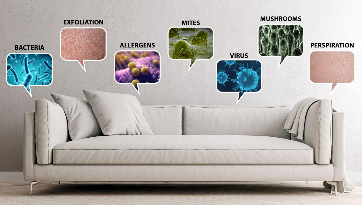 bad smells sofa and carpet